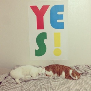 yes cats